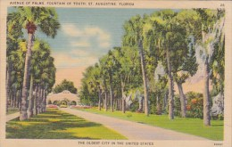 Florida Saint Augustine Avenue Of Palms Of Youth The Oldest City