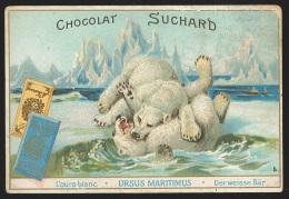Chromo Chocolat Suchard - L'ours Blanc - Suchard