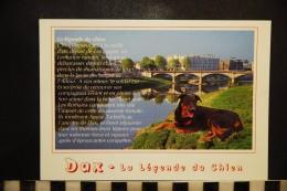 CP, DAX - LA LEGENDE DU CHIEN / HUND / DOG - Chiens