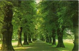 SYLVAN  AVENUE   WOLLATON  PARK  NOTTINGHAM    (VIAGGIATA) - Nottingham