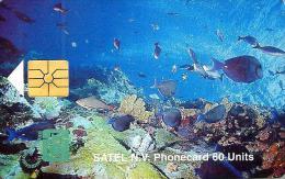 SABA 60 U - 17 FL  FISHES MARINE LIFE CHIP  SAB- C3 CV$20US READ DESCRIPTION !! - Antilles (Netherlands)