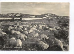 B1083 SHEEPS / PERCORE (SARDEGNA PASTORALE) - Animaux & Faune