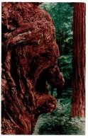 A-983, Postcard, Old Man Burl - Trees