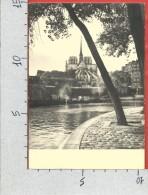 CARTOLINA VG FRANCIA - PARIS - Notre Dame Vue Du Quai D'Orleans - 10 X 15 - Spedizione In ABB. POSTALE - DACTIL - Notre Dame De Paris