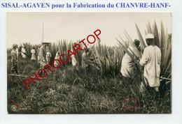 SISAL-Agaven-Ernte-Hanf-Chanvre-Agriculture-Deutsche Kolonien-Serie III/3-Nicht Gelaufen-MILITARIA - Ehemalige Dt. Kolonien