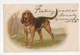 Helena J. Maguire, Blood Hound, Tuck Write Away 270 Chromo Postcard, B118 - Animaux & Faune