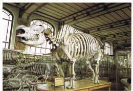 Musée D´histoire Naturelle : Rhinocéros - Museos