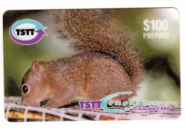 TRINIDAD & TOBAGO CARAIBES MV Cards T&T-P5 100$ CODE F/001 ECUREUIL - Trinité & Tobago