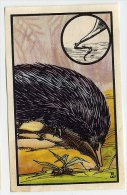 Kwatta - Zoologie (ca 1940) - 65 - Echidne, Egelvogelbekdier, Echidna Histrix - Trade Cards