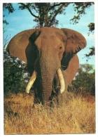 1969 - Sud Africa - Cartolina Timbro Johannesburg^ - Elephants