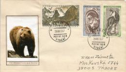 L'ours Brun Et Faune Des Montagnes Des Hautes Tatras, Sur Lettre - Ours
