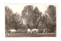CPA 18 LA GUERCHE Les Vieux Saules : Camps - Vaches - Saules - Vue Peu Commune - La Guerche Sur L'Aubois