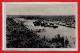 ASIE - IRAQ --  Baghdad - Buffaloes Taking Their Bath - Iraq