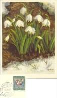 "AK  ""Zeltner - Frühlings Knotenblume""  (Stempel  SCHNEISINGEN (AARGAU))      1965 - Covers & Documents"