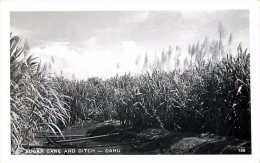 264325-Hawaiian Islands, Hawaii, Oahu, RPPC, Sugar Cane Farm, Ditch, Photo No 136 - Oahu