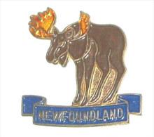 Pin's ORIGNAL, NEW FOUNDLAND - Pin's & Anstecknadeln