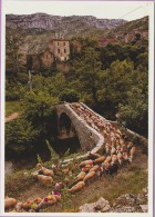 30 °° NAVACELLES - Larzac - Transhumance Du Cirque Par Le Pont De Pierre – écrite * LUXE - Frankrijk