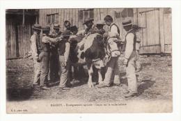 57  MALROY   Enseignement Agricole   Leçon Sur La Vache Laitière - France