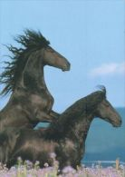 HORSES / PFERDE / CHEVAUX /    POSTCARD UNUSED     ( H  3843 / - Pferde