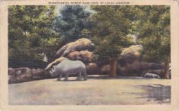Neushoorn Rhinocéros Rhino Nashorn United States Forest Park Zoo St Louis Missouri Dierentuin Zoo Tiergarten Jardin - St Louis – Missouri