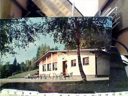 TORCEGNO - VALSUGANA -LOC SARTORELI  BAR ALLE BETULLE   N1975  FI10502 - Trento