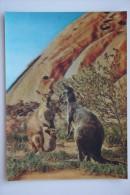 Old Stereo Postcard -  Toppan  3D PC - Kangaroo - Stereoscope Cards