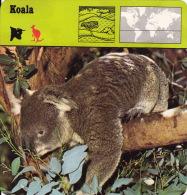 1975 - Editions Recontre - Koala - Animaux