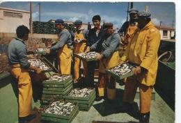Débarquement De Sardines (n°412 Gaby) Non écrite Timbrée Coq 0,25 - Fishing