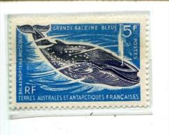 TAAF N° YT 22 ** Luxe - Unused Stamps
