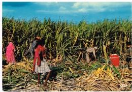 Ile Maurice - Mauritius - Coupeurs De Canne - Cane Harvesters - Maurice