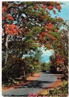 Carte Postale - Maurice -  Mauritius - Port-Louis  - Les Flamboyants Au Jardin Robert Edward Hart - Maurice