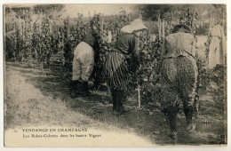 51 - Vendange En Champagne - Les Robes Culottes Dans Les Hautes Vignes - Métiers