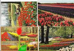 8 GELOPEN POSTKAARTEN:  ´Keukenhof´ - TULPEN, LENTE / SPRINGTIME TULIPS Etc. -  Holland - Bloemen