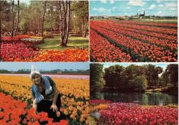 4 ONGELOPEN POSTKAARTEN:  BLOEMENTOOI, TULPEN, LENTE / SPRINGTIME, TULIPS -  Holland, Land Of Flowers - Bloemen