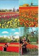 6 POSTKAARTEN: WINDMOLEN & TULPEN, LENTE / WINDMILL & SPRINGTIME, TULIPS - Moulin/Mühle  -  Holland - Bloemen