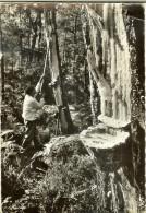 Photo Fitte - Landes De Gascogne, Gemmeur - Verso Timbre Blason Mont De Marsan, Cachet Labenne 1968 - Non Classificati