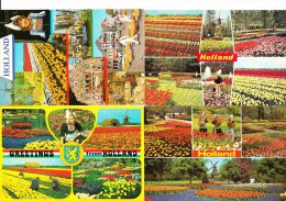 7 MULTIVIEW POSTKAARTEN: 'HOLLAND' & TULPEN, LENTE / SPRINGTIME, TULIPS Etc.  -  Holland / Nederland - Bloemen
