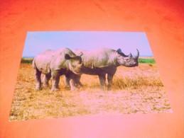 B561 Rinoceronti Non Viaggiata - Rinoceronte