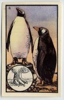 Kwatta - Zoologie (ca 1940) - 109 - Pinguine, Penguins, Manchots, Pinguin - Chromos