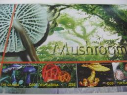 Gambia-Mushrooms - Paddestoelen