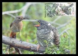 Maxicard Belarus 2014 Mih. 1003 Fauna. Bird Of The Year. Cuckoo - Bielorussia