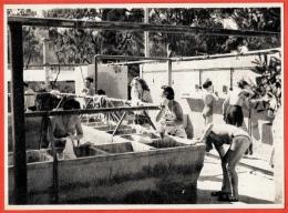 CPSM Post Card CORFOU Grèce Greece - Village Du Club Méditerranée (Lavabos) * Vacances Camping - Grèce
