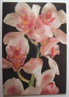 FLEURS - Orchidée - Fleurs