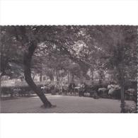 ZRGZTPA4370CPA-LFTD11531.Tarjeta Postal De ZARAGOZA.Casa,campo,arboles.PISTA DE BAILE En El BALNEARIO DE SICILIA - Baile