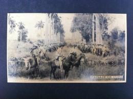 PAISAJE DE CUBA - Postales