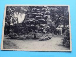 Maison De Repos Et De Convalescence De L'Y.W.C.A. - Le Sapin Bleu ( Thill ) Anno 1956 ( Zie Foto Voor Details ) !! - Retie