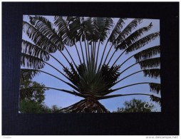Togo Carte Postale  Togo  Lomé , L'arbre Du Voyageur - Togo