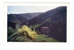 43 Saint Didier Sur Doulon Les Myrtilles Carte Non Voyagée - Autres Communes