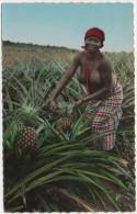 Les Ananas - Cueillette - Couleur - Côte-d'Ivoire