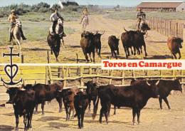 MANADE DE TOROS  MULTIVUES (DIL171) - Toros